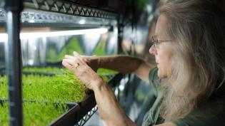 Lynn Wettach checking microgreens at Veggie Confetti